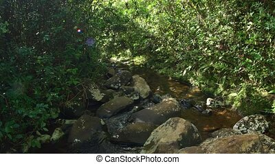 Natural stream flows around boulders and beneath dense vegetation, as it passes through a forest wilderness in Mauritius, with sound.