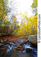Wild stream flowing through Appalachian mountains in Autumn