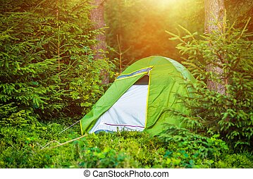 Wild Summer Camping
