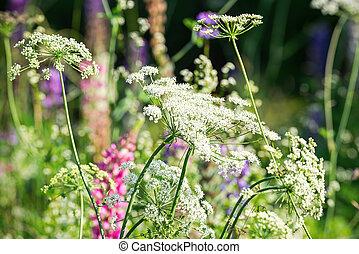 Wild summer flowers in a garden