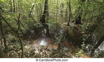 Wild Swamp Water Surface Mirroring Trees - Wild swamp water...