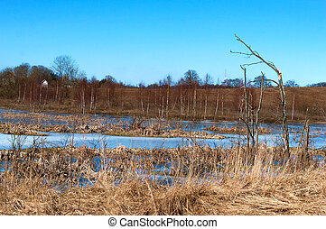 wild swamps, marshland, flooded fields in spring