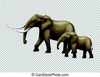 wild, transparant, achtergrond, olifanten