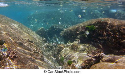 wild tropical fishes