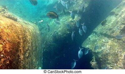 wild tropical underwater