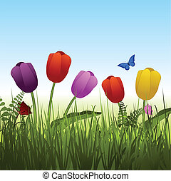 wild tulip background - Colourful tulips with blue sky...