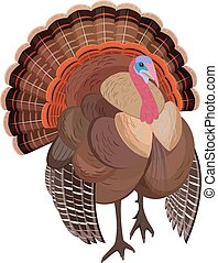 wild turkey for your design