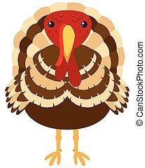 Wild turkey on white background
