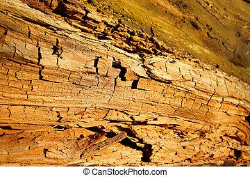 Wild, untouched nature. Wood, wooden background.