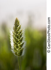 Wild vegetation - Close up Picture of wild trip vegetation