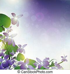 wild violet flowers - wild violet over blue background with ...