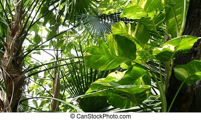 Wild, vivid vegetation of deep misty tropical wood. Jungle landscape. Interior of exotic asia woods. Mossy lianas dangling from the rainforest canopy. Green natural background of subtropical forest