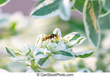 wasp close up sits on a flower, natural background