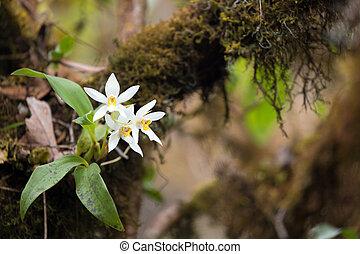 Wild white orchid flower on tree branch