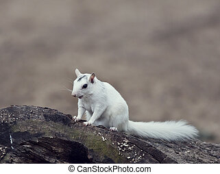 wild white squirrel sitting on a tree