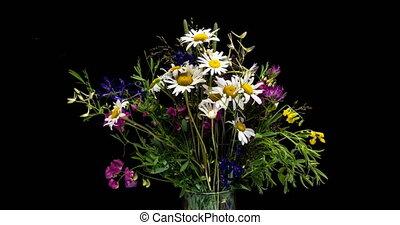 Wild wild flowers in a bouquet, timelapse on a black...