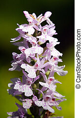 Wild wood orchid