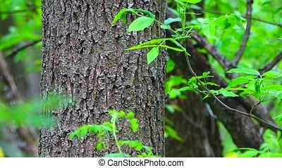 wood - wild wood