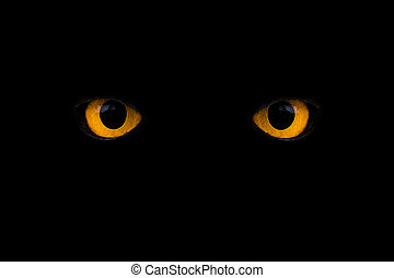 eyes - wild yellow eyes isolated on black