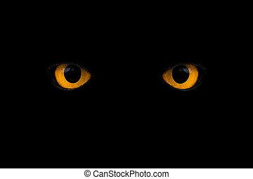 wild yellow eyes isolated on black