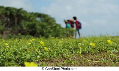 Close-up still shot of wild beautiful blooming yellow flowers, and blurred image of travellers fascinated by nature, Lady Elliot Island, Great Barrier Reef
