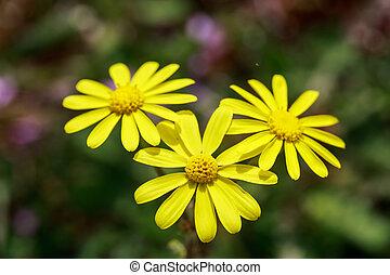 Wild yellow flowers on field closeup wild yellow flowers on field closeup mightylinksfo