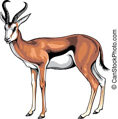 wild young antelope isolated on the white background