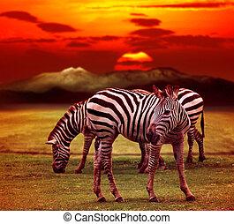 wild zebra standing in green grass field against beautiful...