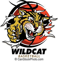 wildcat basketball - wildcat mascot ripping through...