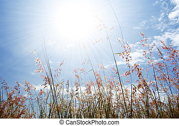 wilde bloem, gras, en, hemel