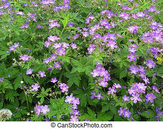 wilde bloemen, in, bos