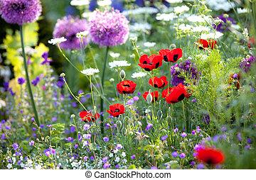 wilde blume, kleingarten, mohnblumen