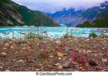wilde blumen, bei, mc'bride, gletscher, in, gletscher- bucht, national, park.