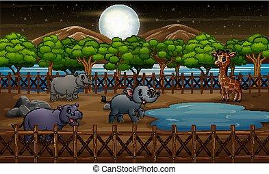 wilde dieren, kooi, natuur, dierentuin, park, open lucht