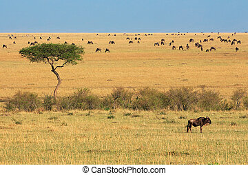 Wildebeest and tree