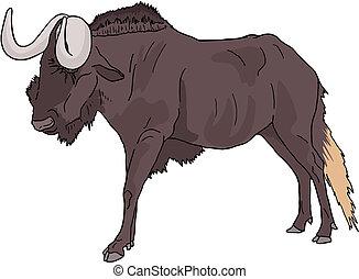 wildebeest, karikatur