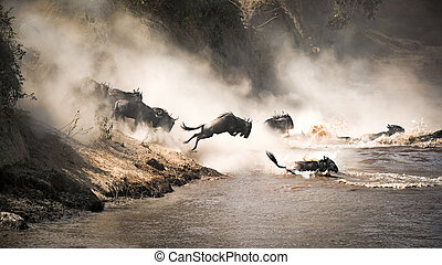 Wildebeest leap of faith into the Mara River - Wildebeest...