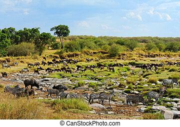 wildelife, masai mara