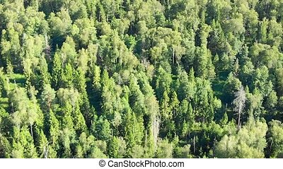 Wilderness area, grown densely with a variety of trees, primarily evergreen conifers.