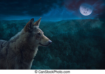wilderness., cheio, cinzento, lua, alfa, lobo, noturna, durante