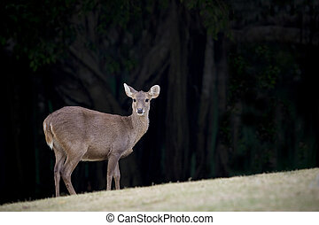 wilderness deer in natural wild life  field
