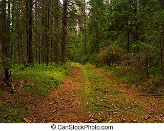 Wilderness footpath - overgrown footpath in a dense forest