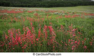 Wilderness Mountain Wildflowers