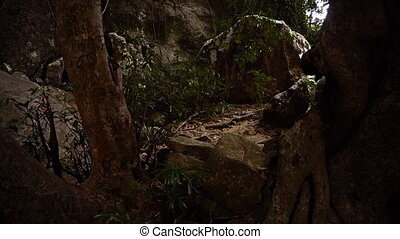 Wilderness Nature Trail over Rough Terrain. FullHD video