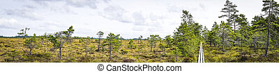 Wilderness panorama landscape of a prairie scenery with a nature trail