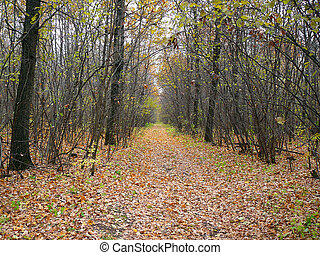wilderness road in autumn october forest