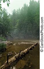 wilderness - fallen tree lying in water in the middle of a...