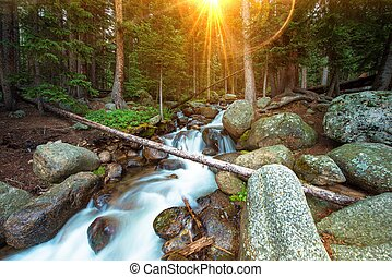 Wilderness Waterfalls with Sun Lights Between Pine Trees....