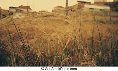 Wilderness, wild grasses vintage color footage