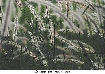 wildes gras, blume